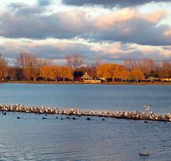 Canandaigua Lake (Abizeleth) Tags: trees light sky seagulls lake newyork water birds evening ducks fingerlakes buoy canandaigualake buoyant dlt canandaiguany