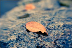 Last Man Standing (bogob.photography) Tags: autumn abstract lensbaby nikon bokeh turin d80 bogob1980
