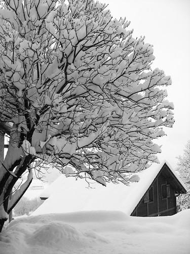 arbre chargé