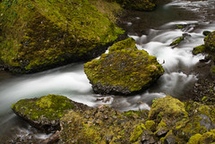 Columbia River Gorge (Driftless Photography) Tags: green oregon river moss stream nw northwest hiking or columbia falls gorge
