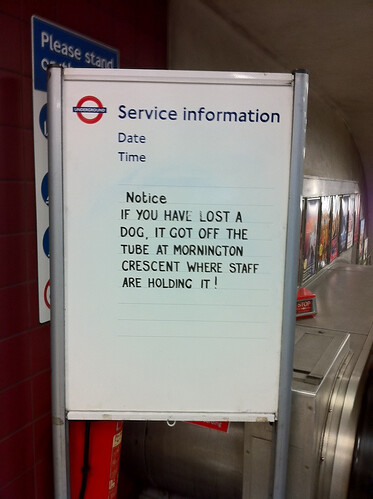 Missing dog at Mornington Crescent by Sam Powell