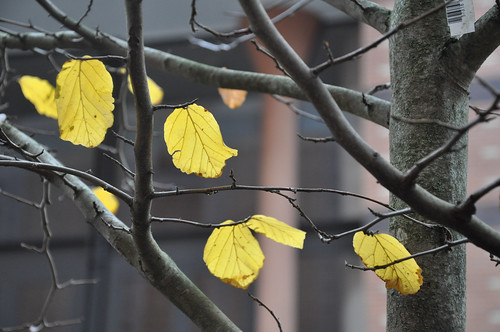 Leaves Still Hanging in Tree