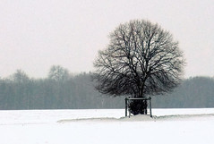 A lone tree on a snowy Basingstoke Common. (Beardy Vulcan) Tags: wood autumn england snow tree fall field weather december hampshire highkey common geotag basingstoke 2010 brassmonkeys oldbasing loddonvalley basingstokecommon