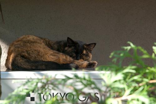 【東京】2010冬,東京-谷根千,貓町