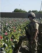 Les États-Unis peuvent-ils l'emporter dans cette guerre en Afghanistan, si dépendante à la drogue ? L'opium, la CIA et l'administration Karzai thumbnail
