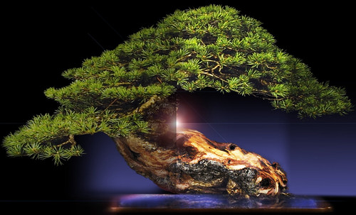 """Bonsai 060 • <a style=""""font-size:0.8em;"""" href=""""http://www.flickr.com/photos/30735181@N00/5261940264/"""" target=""""_blank"""">View on Flickr</a>"""