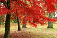(nobuflickr) Tags: nature kyoto autumncolors  kyotoimperialpalace
