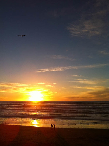 Pacific Coast Sunset (With People And Bird)