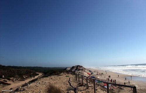 Praia e pinhal