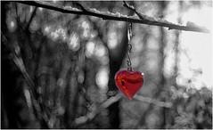 Warm hart, cold bokeh (leo.roos) Tags: christmas winter decorations snow heart bokeh sneeuw christmastree grlitz m42 hart meyer kerstboom kerst selectivecolour a900 meyeroptik hugomeyer trioplan darosa bokehistan trioplan5029 leoroos