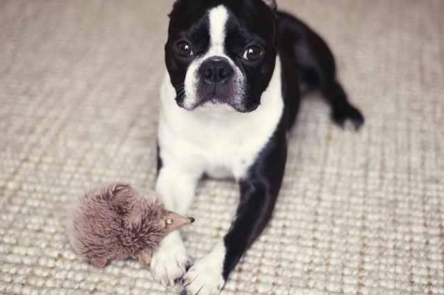 Oscar and his hedgehog