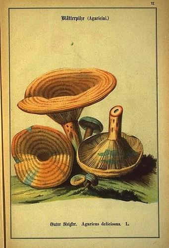 013-Allgemein verbreitete eßbare und schädliche Pilze 1876- Wilhelm von Ahles