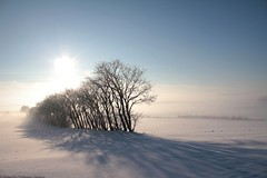 snow (Alberthepj) Tags: world christmas blue winter light sky sun white mist snow cold tree ice field fog landscape denmark nice december day award narnia danmark beautyful apj underbart