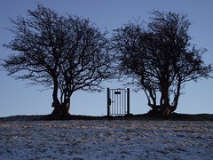 Two trees and a gate (Lune Rambler) Tags: trees sky cold twilight december peace freezing calm valley fells winterbeauty lunevalley platinumheartaward oltusfotos platinumpeaceaward lunerambler tripleniceshot 4timesasnice 6timesasnice 5timesasnice 7timesasnice