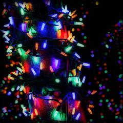tangled... (AmyJeanius) Tags: christmas holiday strand zoo lights bright tangled minilights