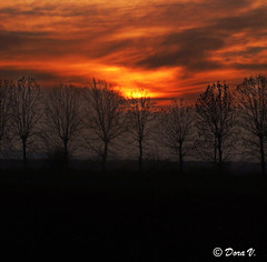 Dancing in the fire (Dora Joey) Tags: trees sunset red silhouette fire tramonto dancing danza rosso fuoco fantasmi spiriti ghostes bestcapturesaoi