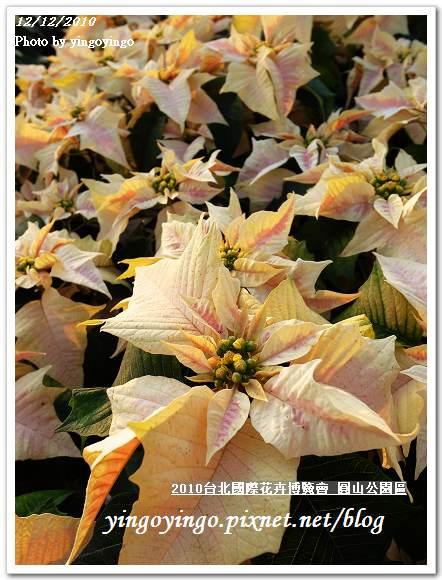2010花博_圓山公園區 精緻花卉區 991212_R0016686