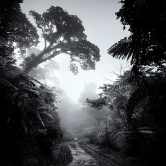 Jurassic (Hengki Koentjoro) Tags: trees mist wet car rain fog forest dawn dusk surreal jungle