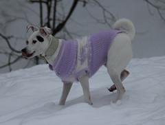 hellfliederpulli1 (mo.ho) Tags: von babydogs hundepullover
