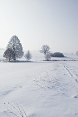 Winter _ .... (MaddixLuxx) Tags: winter snow cold tree pentax footprints sigma 1770 kalt weg deepsnow 15c fusstapfen pathpfad