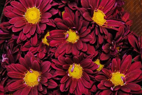 [フリー画像] 花・植物, 赤色の花, 201101040700