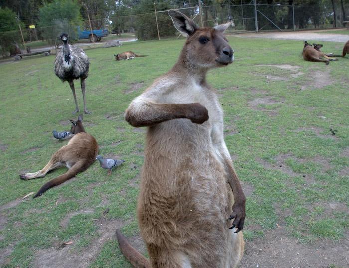 Australia (44 of 332)