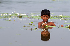 The concept of happiness [..Chuadanga, Bangladesh..] (Catch the dream) Tags: flowers reflection girl smile rural children wonder village child blossom joy happiness submerged bangladesh fascinated whiteflowers girlwithflowers wondered waterweeds chuadanga catchthedream mohammadmoniruzzaman reflectionofface gettyimagesbangladeshq2