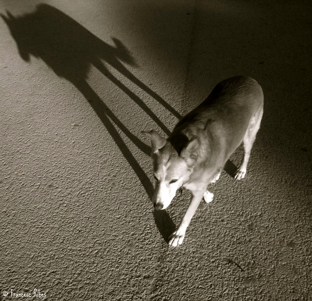 lisa y sombra