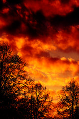 Apocalypse *explored* (ronny..) Tags: trees sunset red sky orange sun black tree nature sunshine silhouette clouds happy fire evening bomen skies afternoon sundown sunday apocalypse wolken boom explore burning flame burningsky flaming sliders vuur hss vlam flamingsky explored sliderssunday happysliderssunday droptheshutter