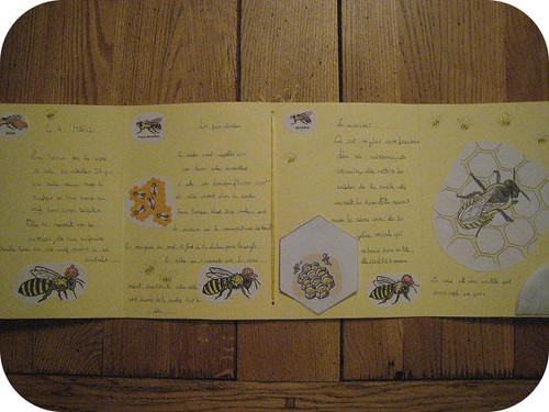 lapbook abeille 6