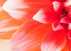 flower 2 (twentycreek) Tags: ontario jordanstation