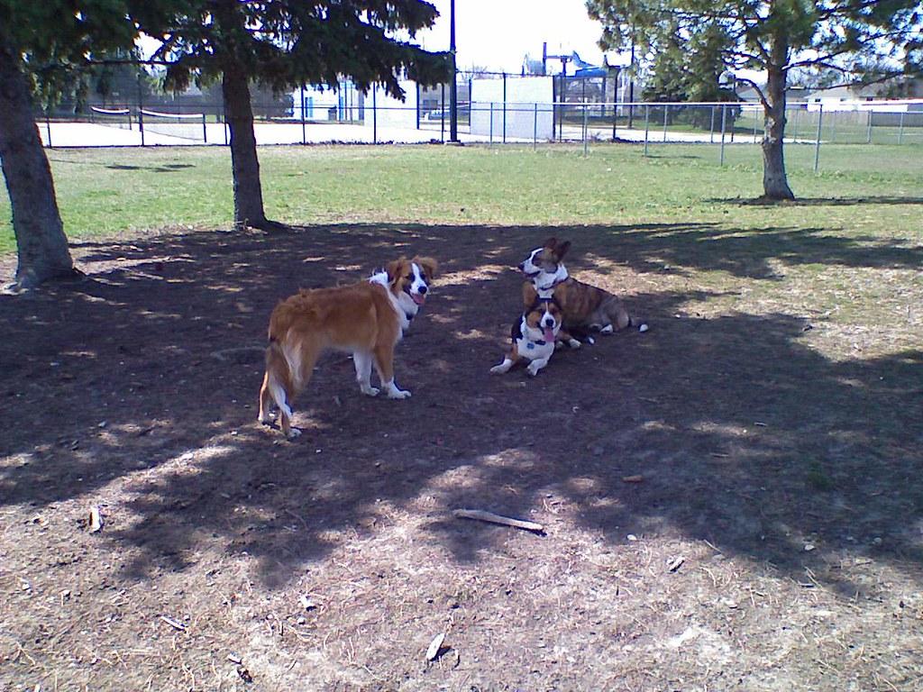Remington Booster Park Off-Leash Zone