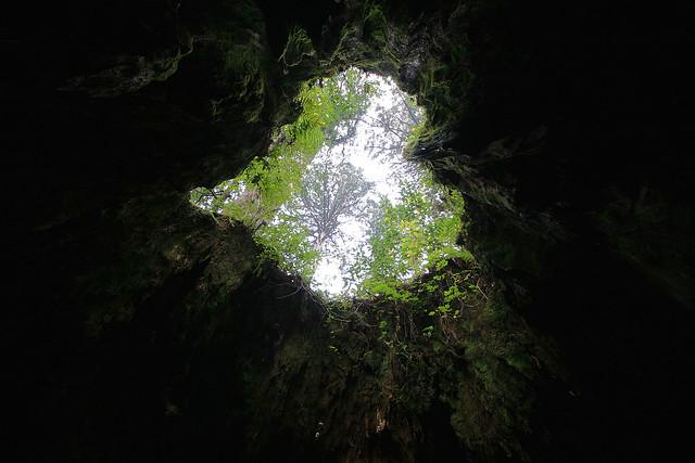 Yakushima Tree - 26