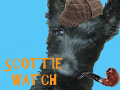 Scottie Watch