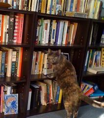 Organizing a Reading List - Smart Bitches, Trashy Books