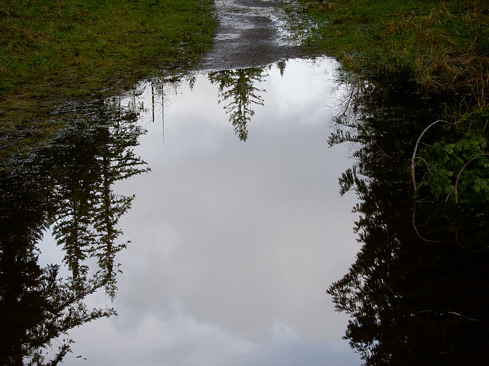 Puddle-in-the-Path_0754