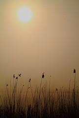 Foggy Sun (Harry Kool) Tags: orange sun mist weather fog canon eos zon medemblik oranje weer