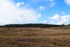 Rozendaal en omg 161001 040 (KB3680) Tags: heide rozendaal gelderland nederland veluwe veluwezoom nationaalpark