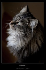 Uyuni (Joaquin Pueche) Tags: cats gatos canon5d voigtlnder colorheliar75mmf25 tsavoes