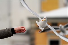 I catch it  (Hausstaubmilbe) Tags: bridge bird flying wings feeding seagull hungry mwe steyr bred canonef135mmf2lusm catchit abigfave anawesomeshot canoneos7d zwischbrcken