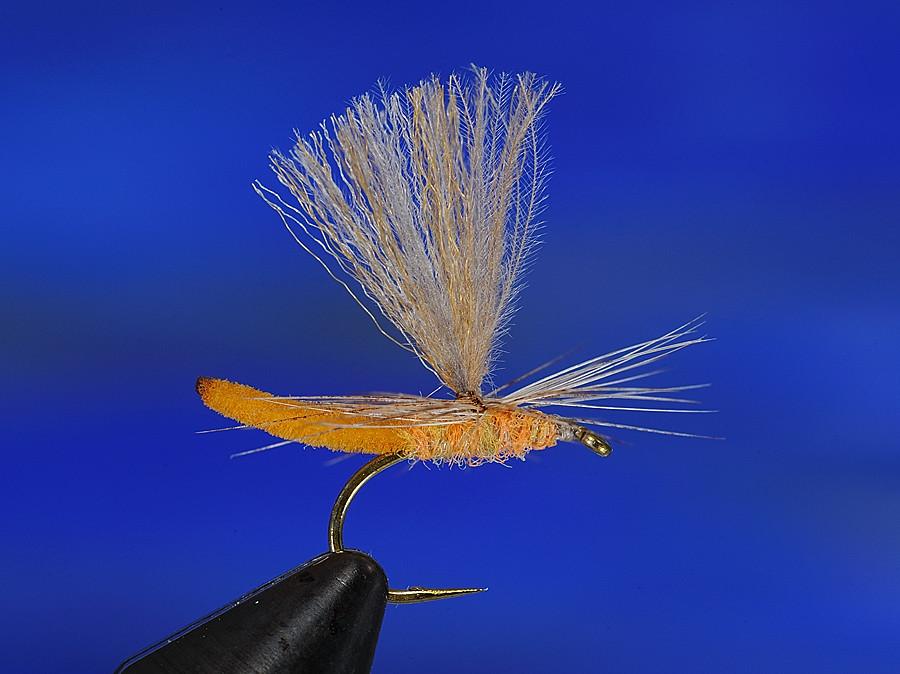 André Brun Micro Polychenille Dun (aurivillii)