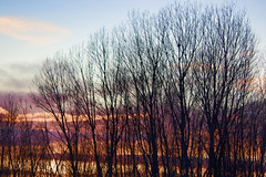 Trees at sunset light (Theophilos) Tags: trees sunset nature branches