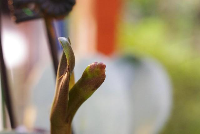 K-x 生活隨拍 社區植物及窗外景色