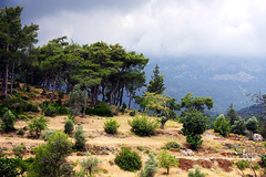 Trees on the slope of mountain. Kemer, Turkey. (be.image photography) Tags: wood summer cloud mountain plant tree green nature fog pine forest turkey landscape woods day nobody ridge scenics kemer