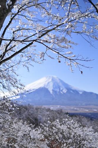 Foot of Mt.Fuji snow scene