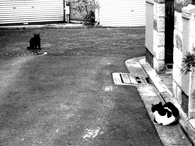 Today's Cat@2010-12-10