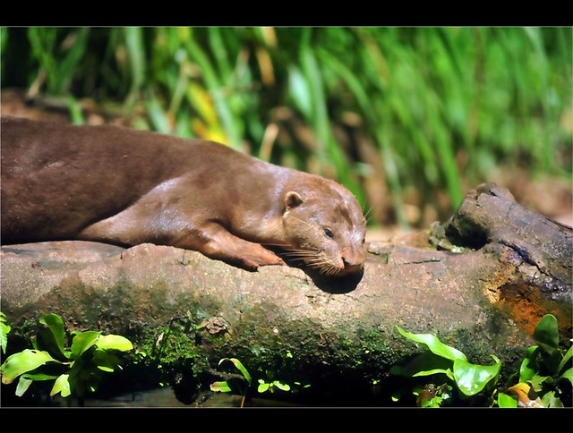 Zoo Taiping 2