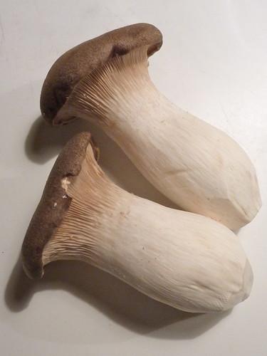konings oesterzwam