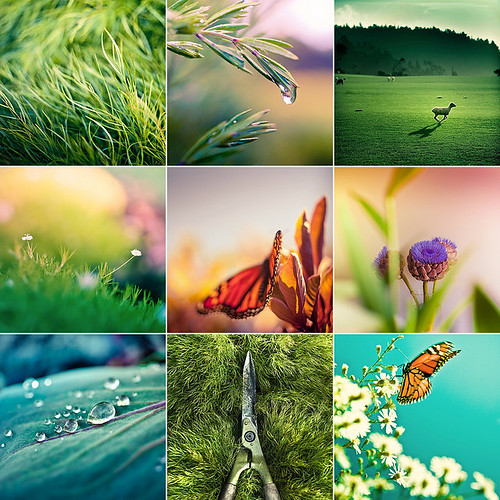Color Nature Grid
