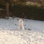 Bonhomme de Neige (selon Noé) - 1 thumbnail